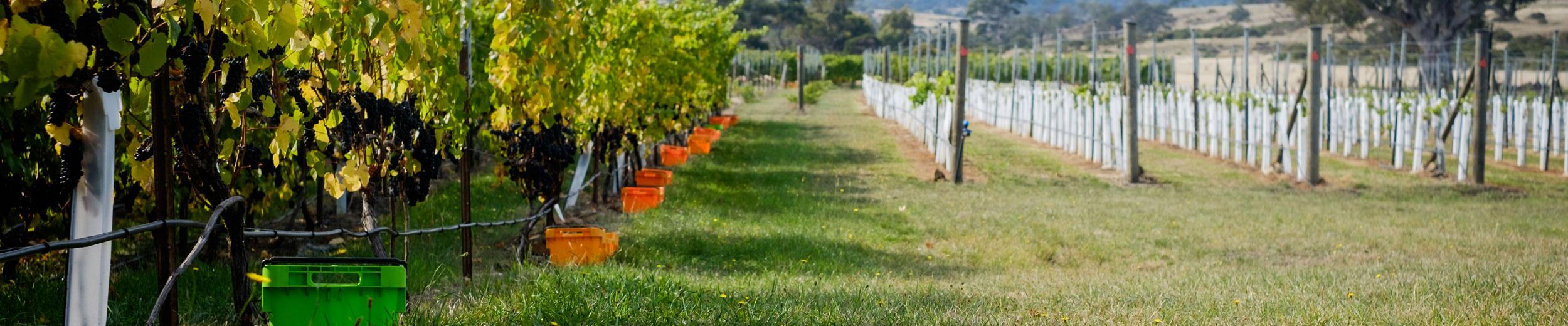 mailing list for Craigie Know vineyard