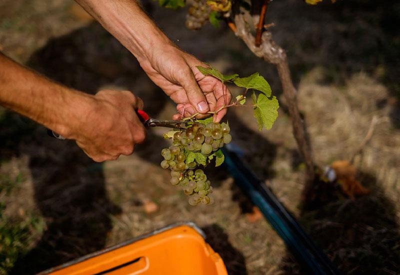 east coast tasmania's wine trail